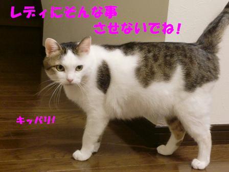 コピー ~ CIMG0366