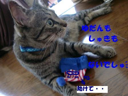 コピー ~ CIMG0685
