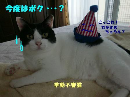 コピー (2) ~ CIMG0689