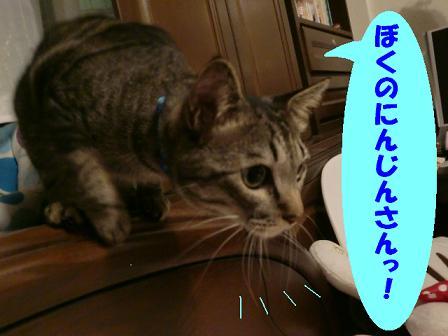 コピー ~ CIMG0593