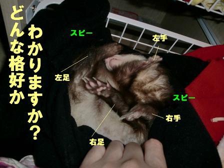 コピー ~ CIMG0131