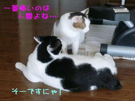 コピー ~ CIMG0806