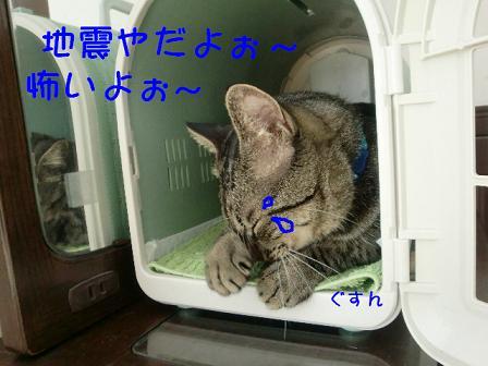 コピー ~ CIMG0838