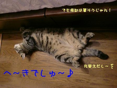 コピー ~ CIMG0633