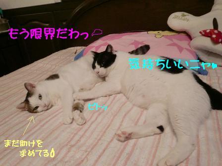 コピー ~ CIMG0826