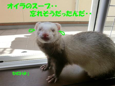 コピー ~ CIMG0888