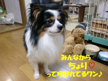 コピー ~ CIMG0930