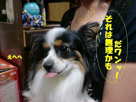 コピー ~ CIMG0933