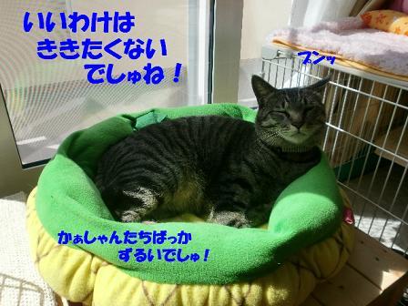 コピー ~ CIMG0147