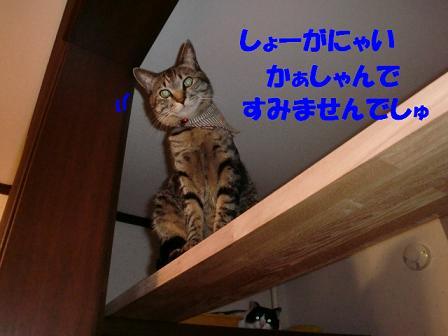 コピー ~ CIMG0171