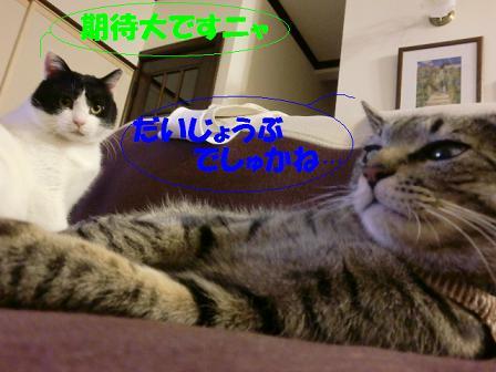 コピー ~ CIMG0222