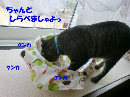 コピー ~ CIMG0881