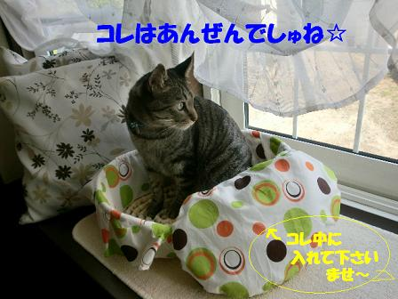 コピー ~ CIMG0877