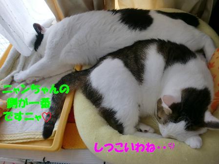 コピー ~ CIMG0693