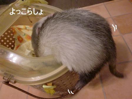 コピー ~ CIMG0988