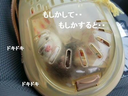 コピー ~ CIMG0989