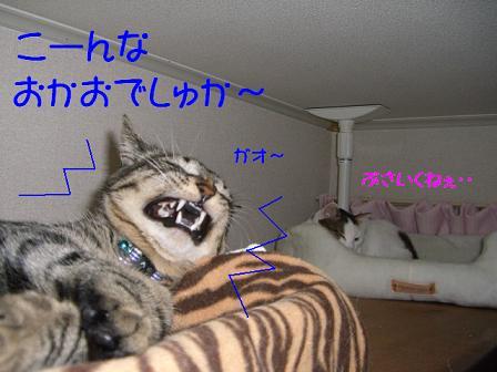 コピー ~ CIMG0474