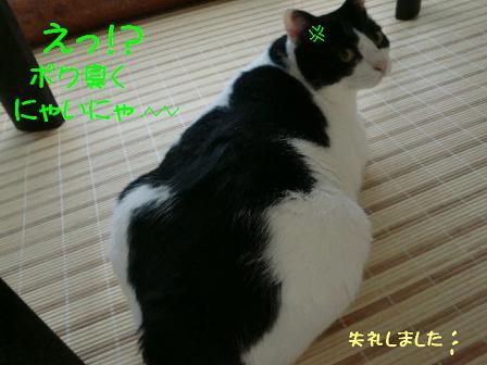 コピー ~ CIMG0967