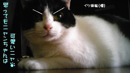 コピー ~ DVC00193