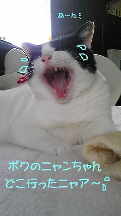 コピー ~ DVC00134