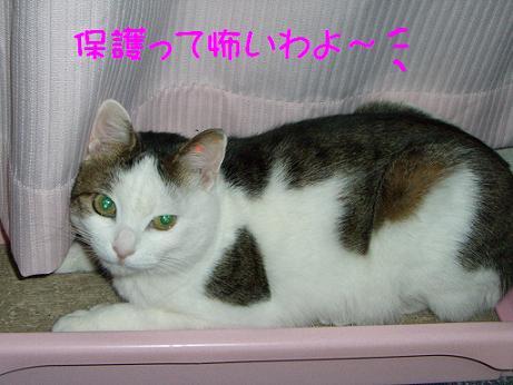 コピー ~ CIMG0315