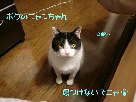 コピー ~ CIMG0329