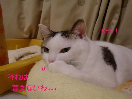 コピー ~ CIMG0937