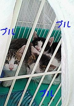 コピー ~ NEC_0102