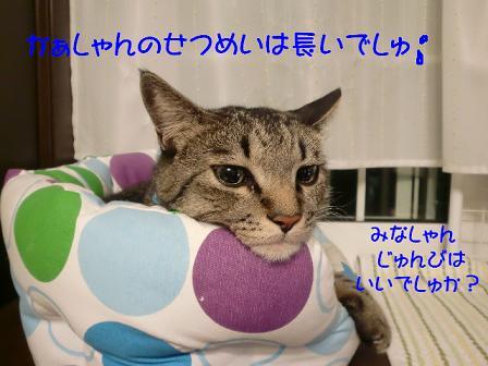 コピー ~ CIMG1032