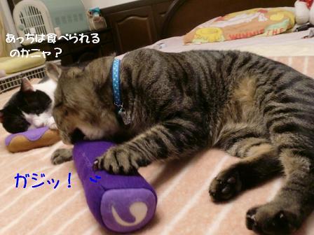 コピー ~ CIMG1157