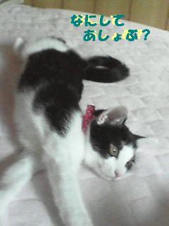 コピー ~ NEC_0008