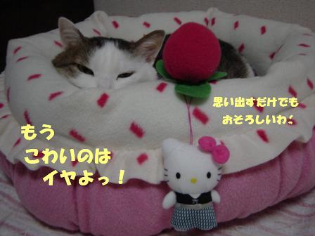 コピー ~ DSC02377