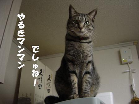 コピー ~ DSC02465