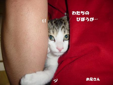 コピー ~ DSC00548