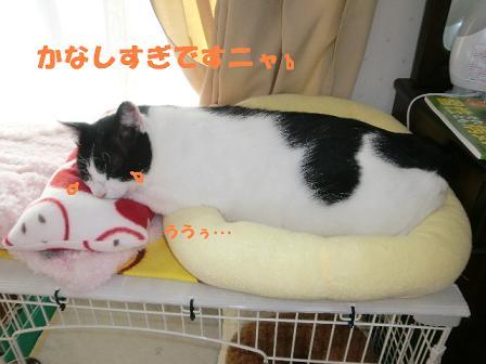 コピー ~ CIMG0498