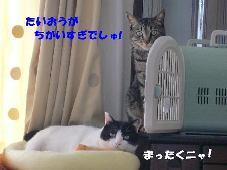 コピー ~ CIMG1050