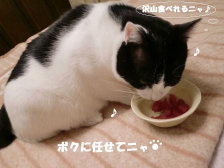 コピー ~ CIMG1300