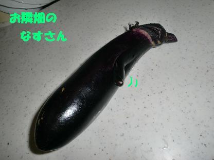コピー ~ CIMG0738
