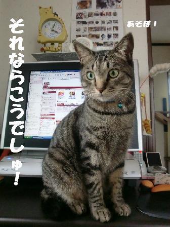 コピー ~ CIMG1067