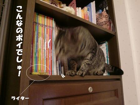 コピー ~ CIMG1104
