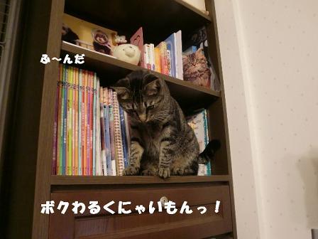 コピー ~ CIMG1106