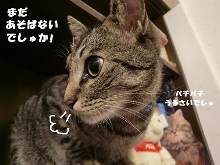 コピー ~ CIMG1109