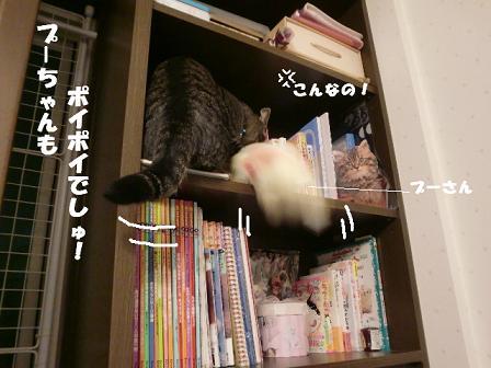 コピー ~ CIMG1107
