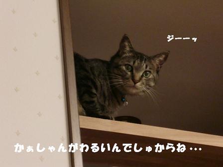 コピー ~ CIMG1230
