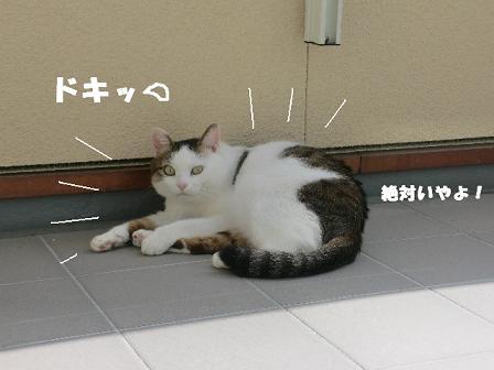 コピー ~ CIMG0322