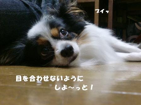 コピー ~ CIMG1322