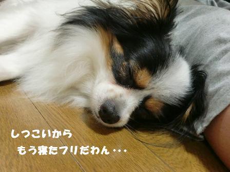 コピー ~ CIMG1338