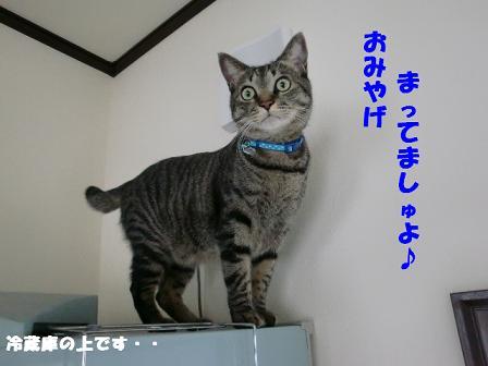 コピー ~ CIMG1026