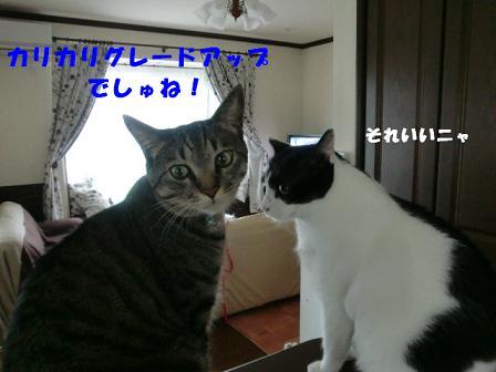 コピー ~ CIMG0757