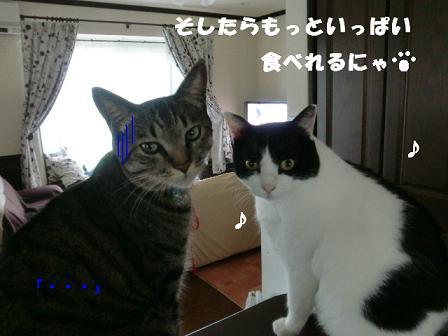 コピー ~ CIMG0758